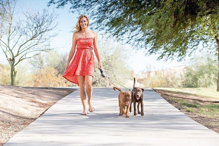 20+ вещей, которые просто необходимо иметь каждому владельцу домашнего животного (Хотя бы для того, чтобы поднять себе настроение)