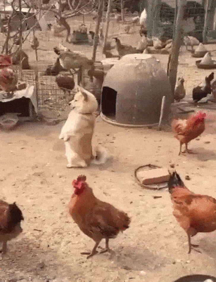 20+ животных, которые испытывают проблемы с самоопределением