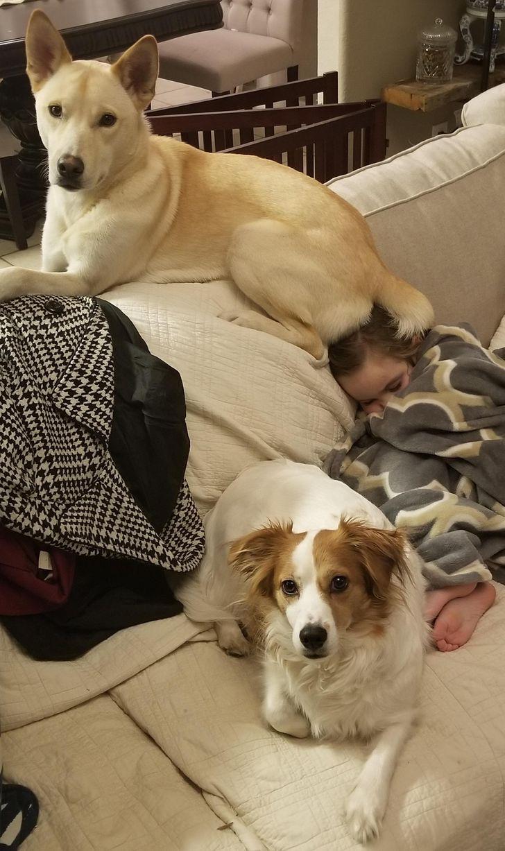 Звериные детёныши и их приёмные родители | Блогер Belochkina на ... | 1227x728
