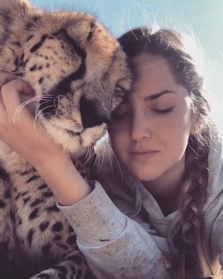 22фото, которые доказывают, что животные на99% состоят излюбви