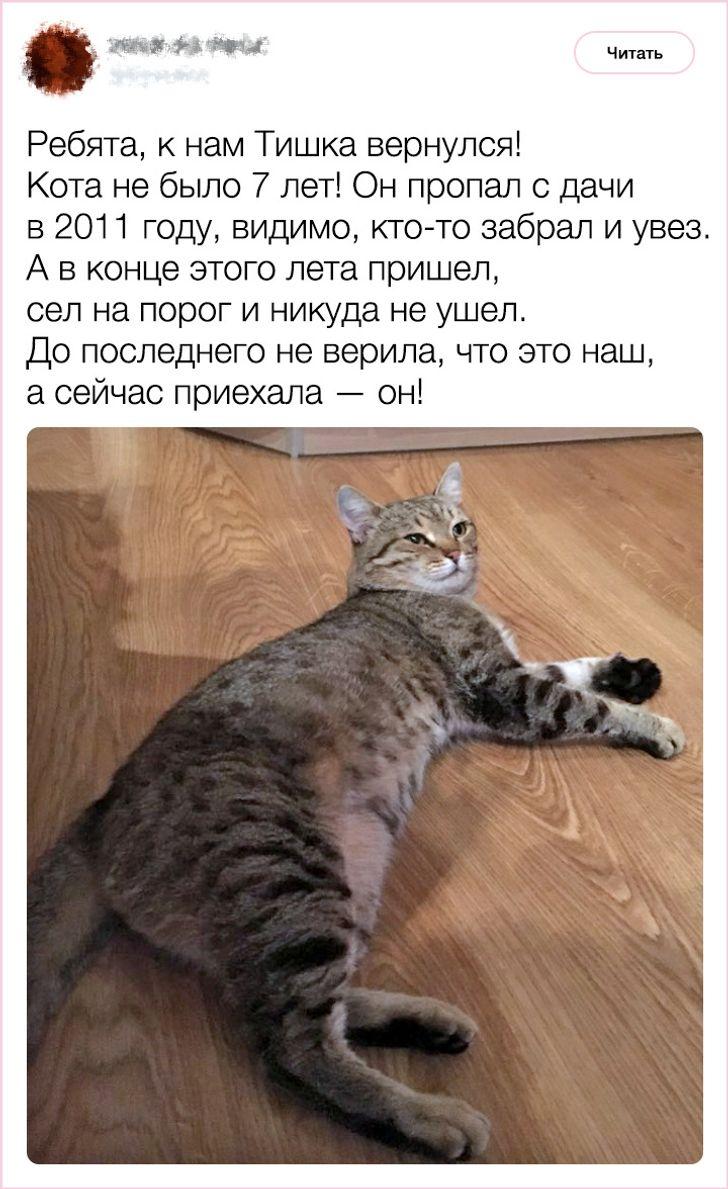 20+фактов опсихологии ихарактере кошек, которыми поделился заводчик состажем