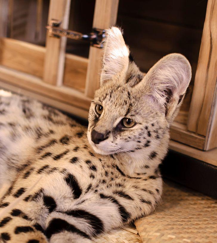 8 экзотических животных, которым место в дикой природе, а не у нас дома