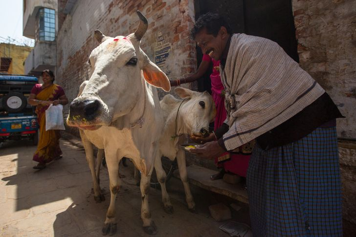 14 законов о защите прав животных, которые нужно принять по всему миру немедленно