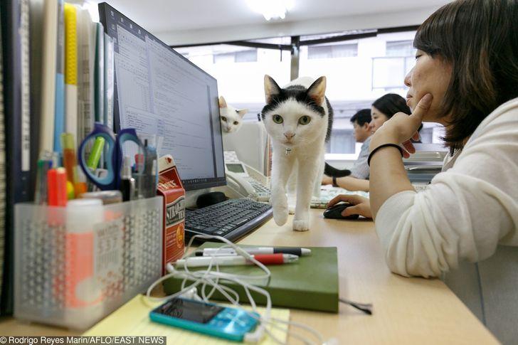 Японская компания держит кошек-помощников, чтобы уменьшить стресс наработе. Иэто просто мечта