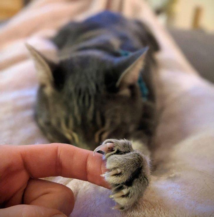 20 котов, при взгляде на которых у вас екнет сердечко