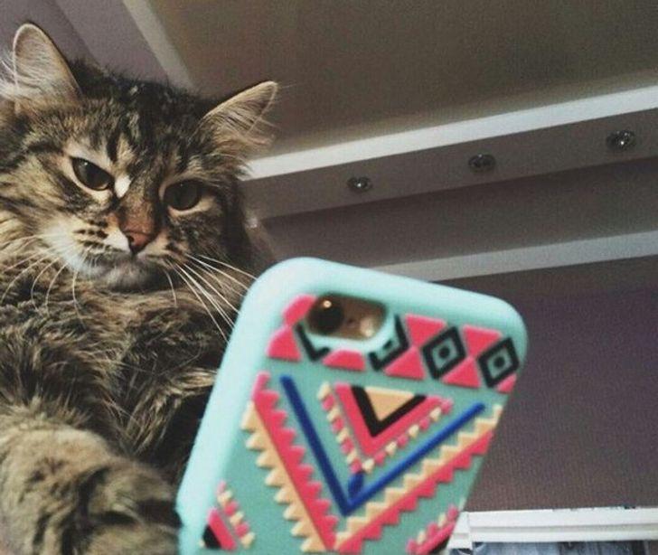 Мы разобрались, почему нашим котам приходится делать «кусь» и как с этим бороться