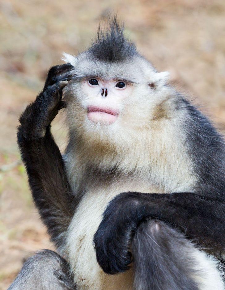 11удивительных животных, окоторых вынезнали