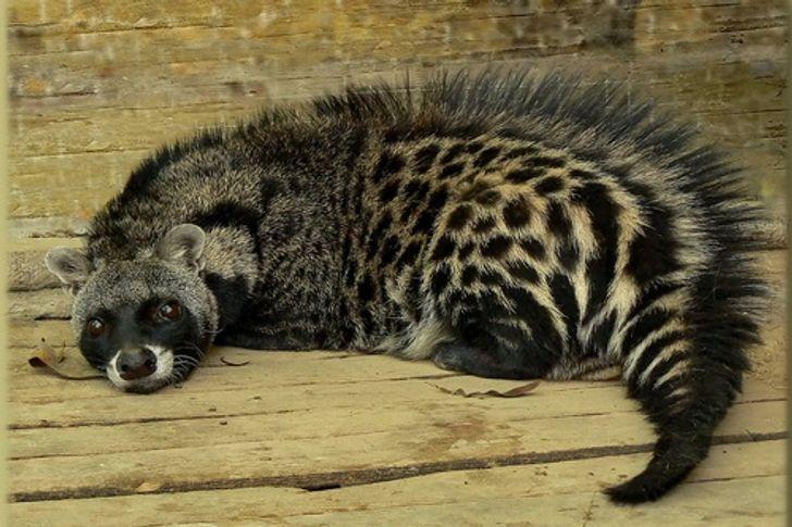 12 животных, о которых многие никогда не слышали (Но по очаровательности они способны составить конкуренцию котикам)