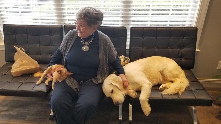 20+ доказательств того, что не только люди заботятся о собаках, но и наоборот