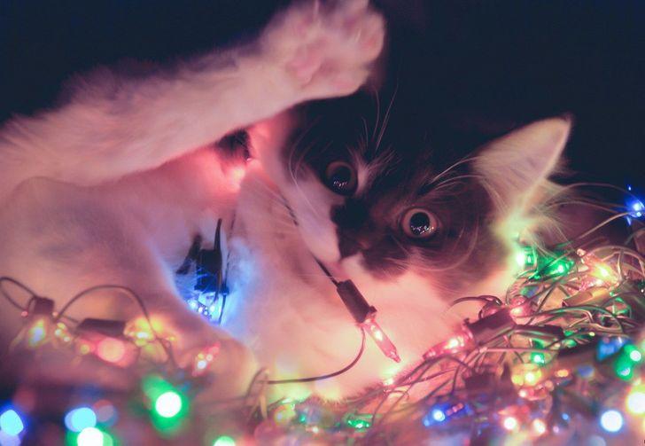 20доказательств того, что коты— главное украшение Нового года
