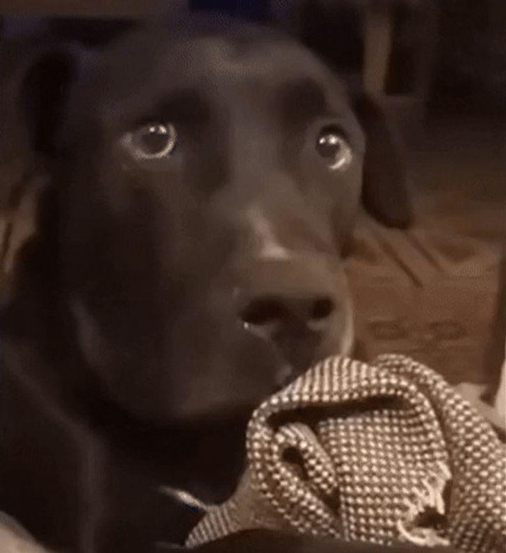 19 животных, чьи эмоции на морде написаны