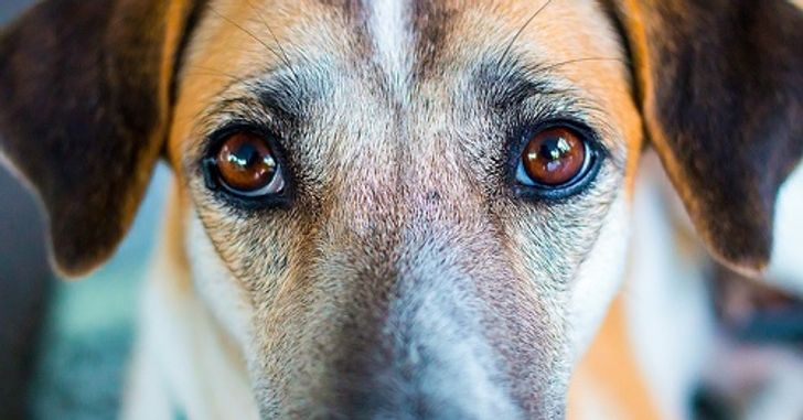 Ученые доказали, что собаки могут распознать плохого человека