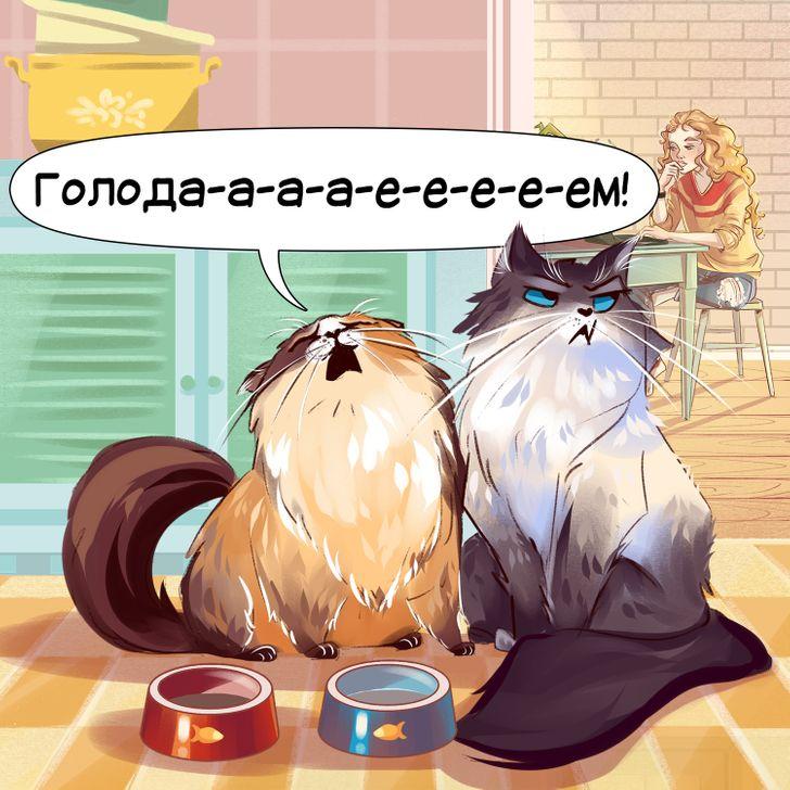 12 звуков, которые издает ваш котик, и что они означают