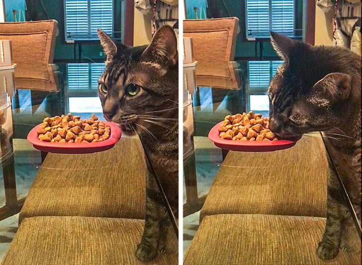 18 кошек, которые эволюционировали во что-то большее