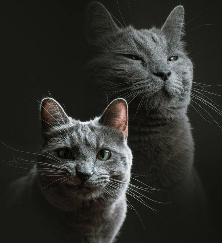 20+ животных, которые поднимут настроение даже тем, кто решительно настроен погрустить