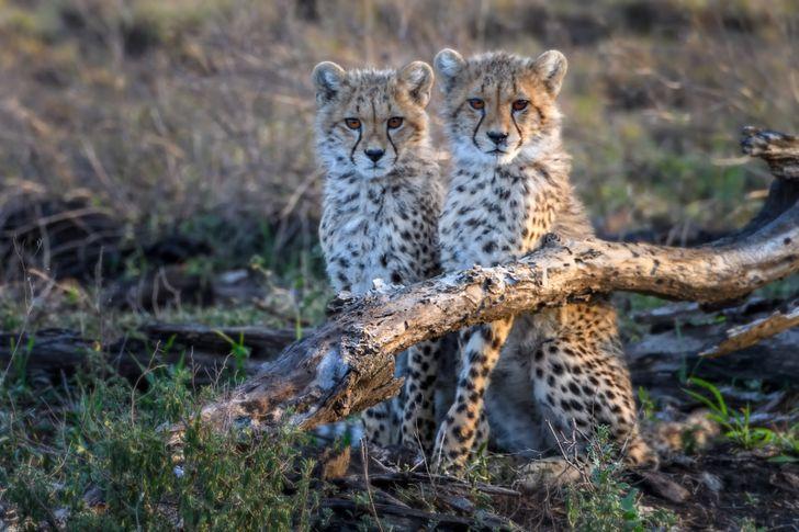 19фотографий природы, заставляющих полюбить этот мир всем сердцем