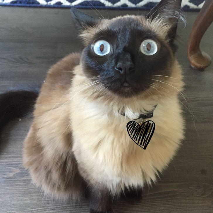 Люди делятся уморительными причудами своих кошек и собак. Ваши домашние животные такие же странные?