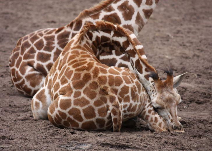 15 знакомых нам животных, которым есть чем нас удивить