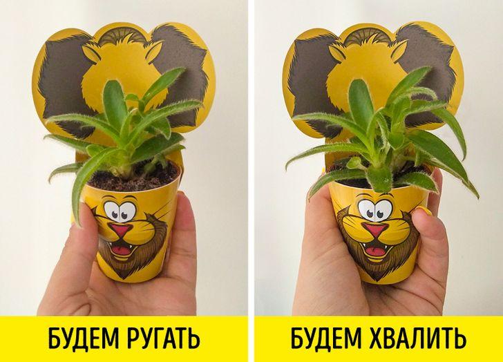 Мыдва месяца унижали одно растение ихвалили другое. Инам очень хочется рассказать орезультатах