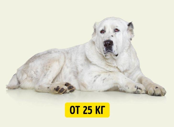 Простой способ определить возраст собак икошек вчеловеческих годах