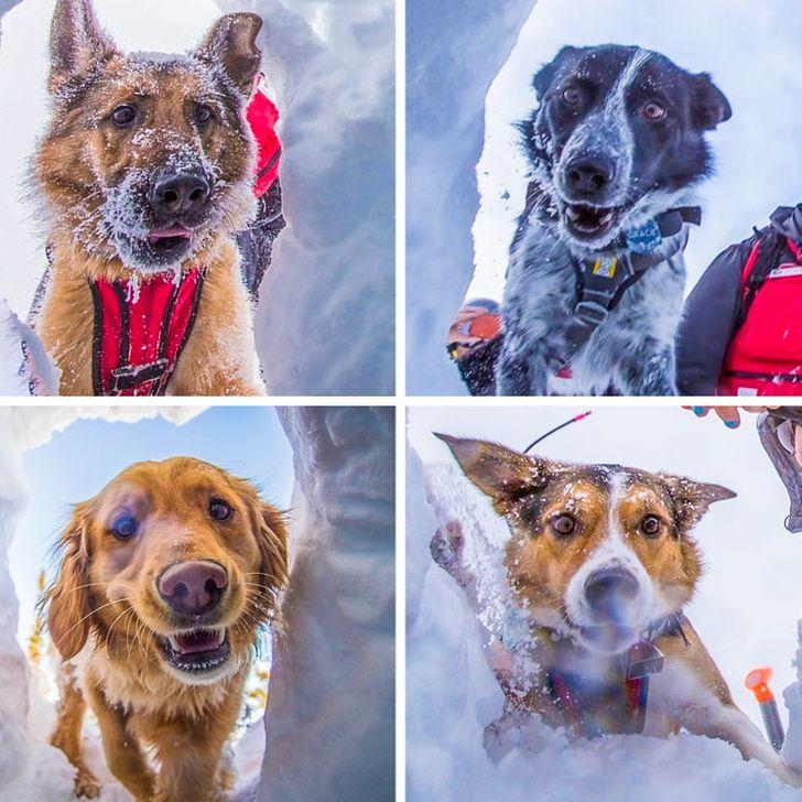 20+ собак с изюминкой, которые запросто утрут нос идеальным представителям пород