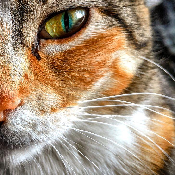 23фотографии животных, глядя накоторые невозможно оставаться грустным