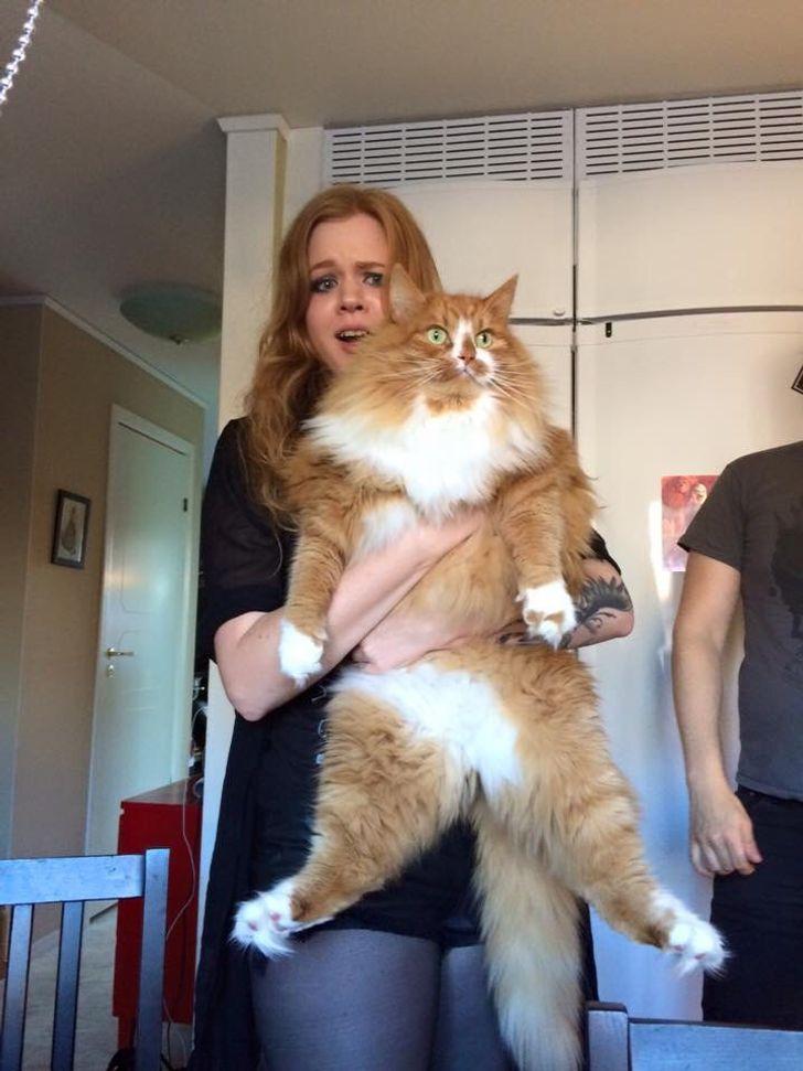 20 могучих котов, от тыгыдыков которых сотрясаются стены