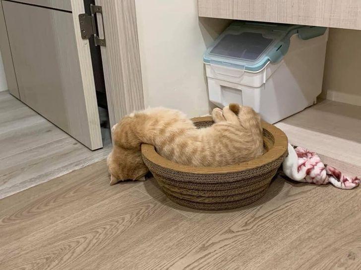 19 котов, для которых отдых может быть комфортным в любом месте и в любой позе
