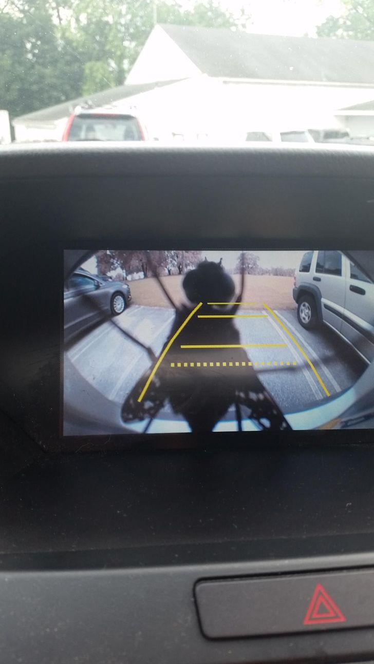19увлекательных фото скамер наблюдения, после просмотра которых захочется поставить себе дома такуюже