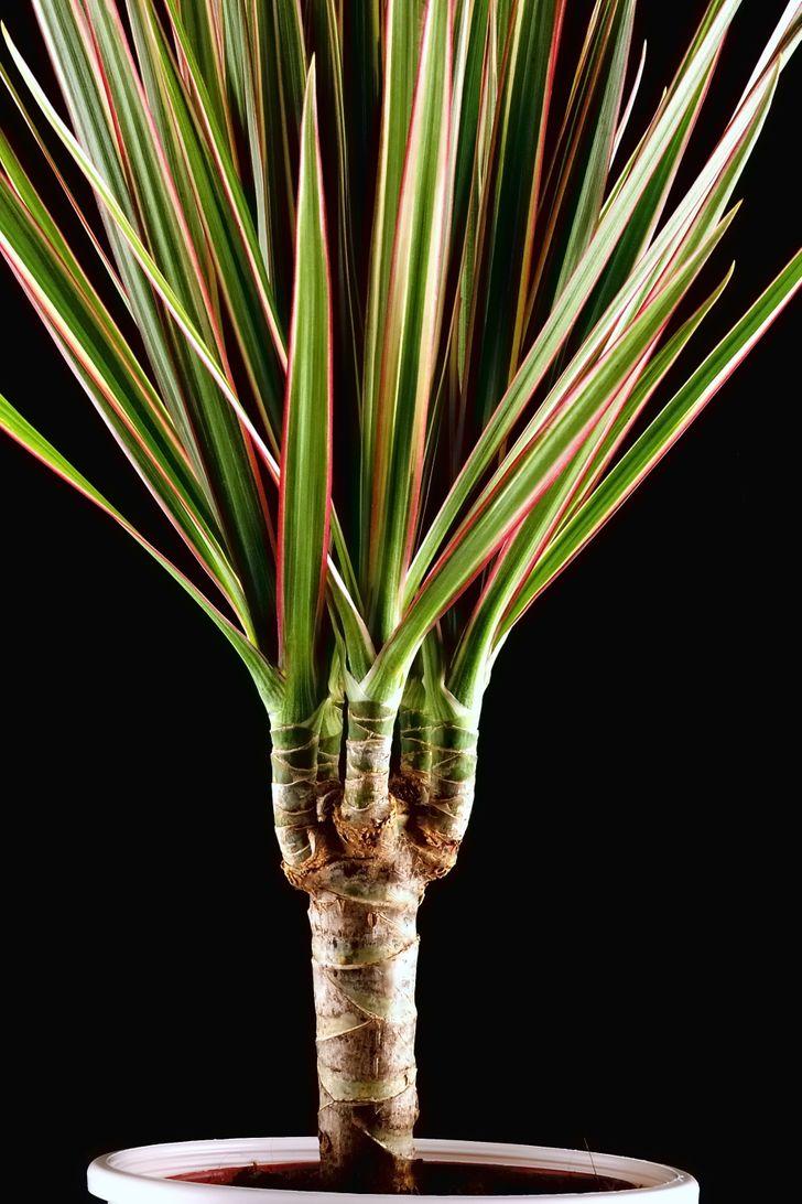 Топ-15 растений для очистки воздуха помнению NASA