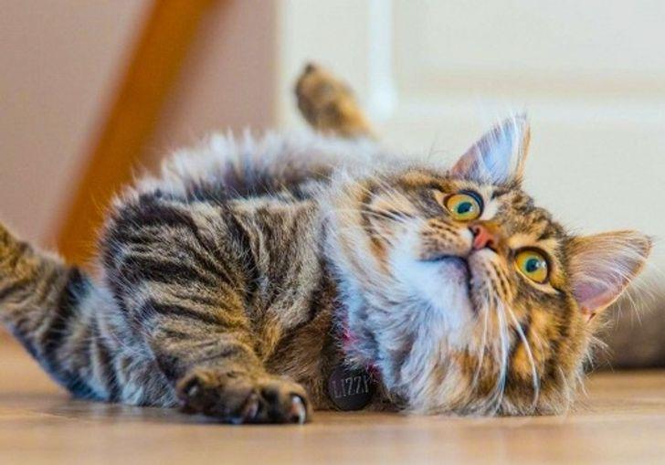 6 особенностей жизни с котом, о которых не догадываются даже опытные заводчики