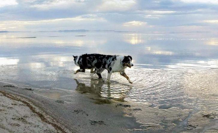 20панорамных снимков животных, которые можно использовать как антидепрессанты