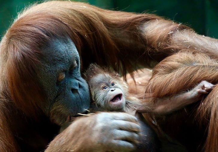 20+ детенышей животных, встреча с которыми стала нечаянной радостью