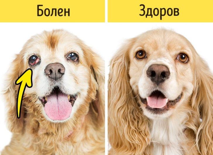 12 сигналов к тому, что питомца надо срочно показать ветеринару