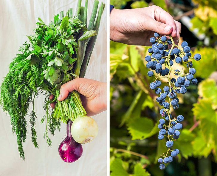 10+ способов разобраться с домашними заботами раз и навсегда с помощью обычной пищевой соды