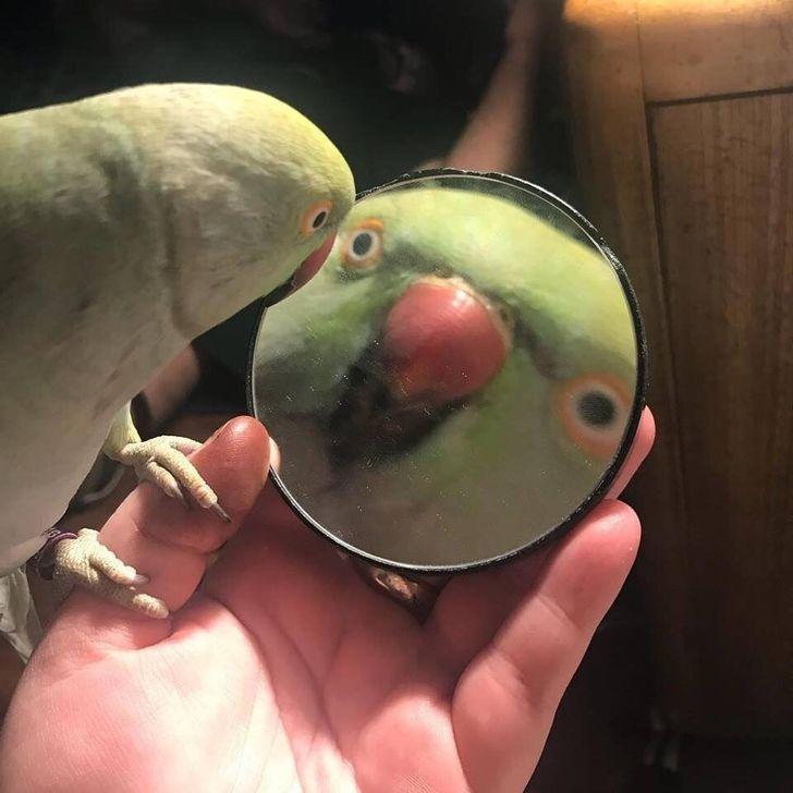 25+попугаев, которые заработали черный пояс похаризме