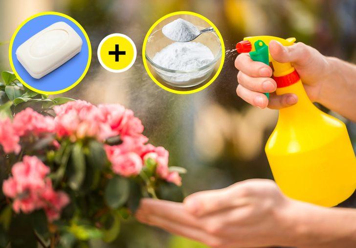 5 свойств соды, которые помогут преобразить ваш сад
