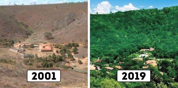 Бразильская пара 20 лет высаживала лес, и теперь тысячи диких животных вернулись домой