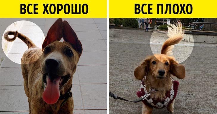 20+ фактов о собаках, узнав которые вы захотите пожать лапу каждому встречному псу