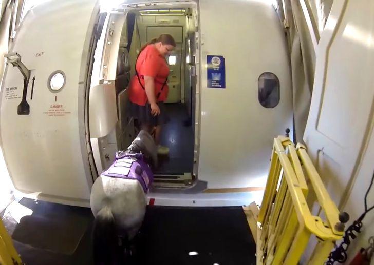 19 человек, которые внезапно встретили крутых соседей на борту самолета
