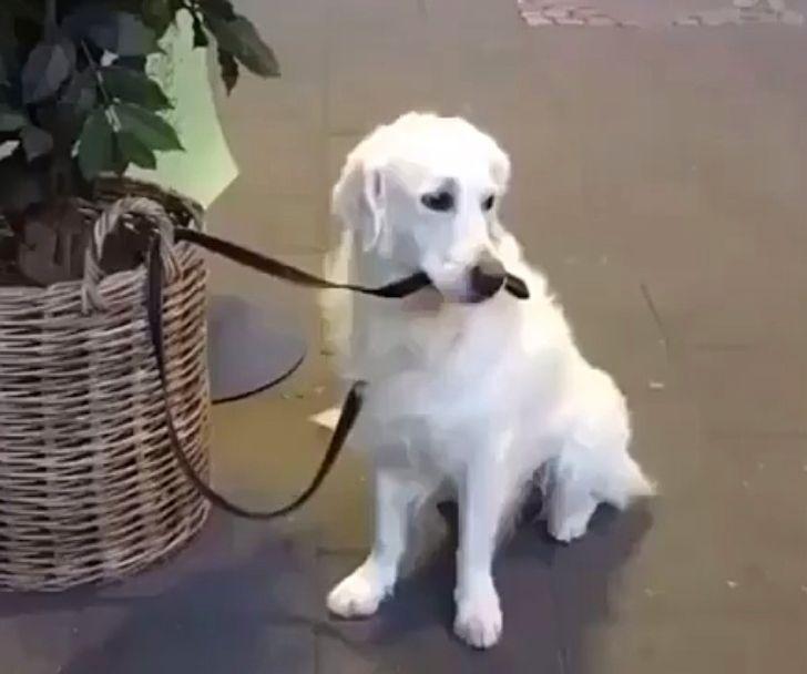 20+ доказательств того, что жизнь без собак была бы тоской зеленой