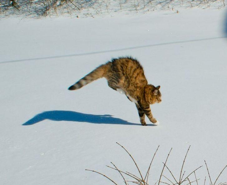 20+доказательств того, что кошки иснег непредназначены друг для друга