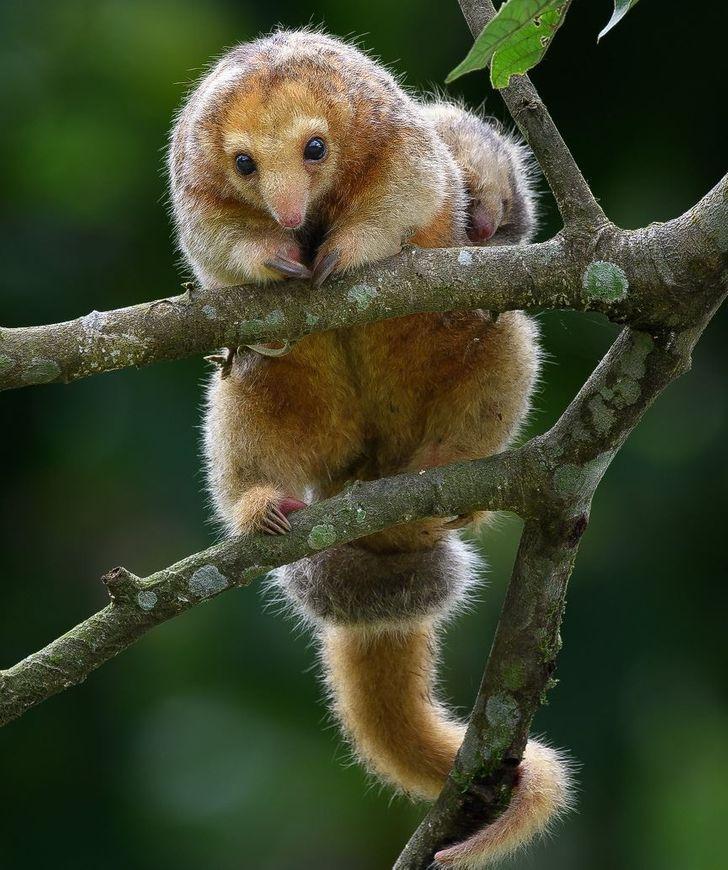 16 животных, которые созданы природой, чтобы ошеломлять