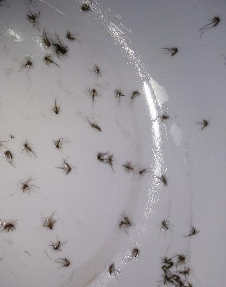 7 типов людей, которых просто обожают комары