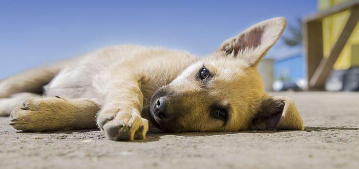 Нидерланды стали первой страной без уличных собак, и вот как они этого добились