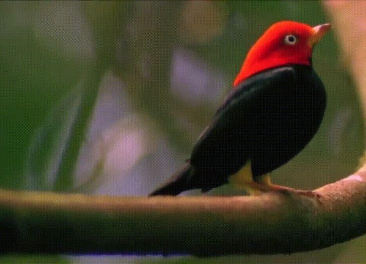 20 занимательных фактов о животном мире, о которых нам не рассказывали на уроках биологии