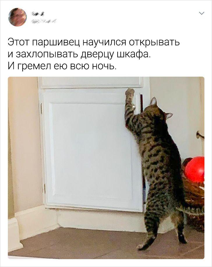 20+ абсурдных ситуаций, в которые могли попасть только те, у кого есть кот