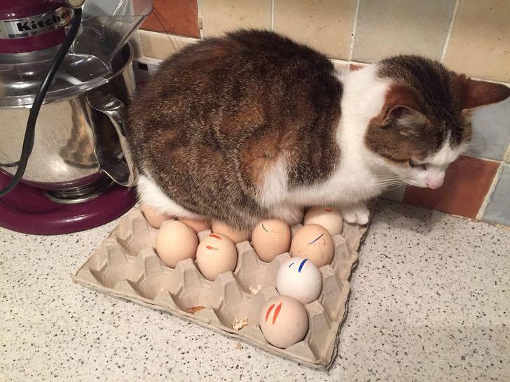 20+котов-преступников, которых мыуже простили