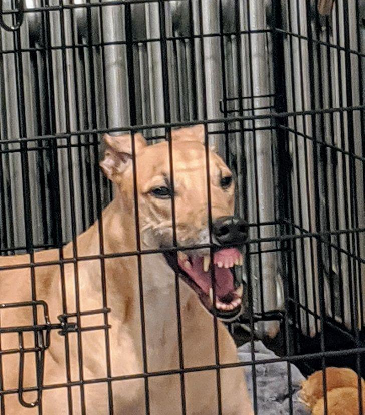 20+ собак, у которых слетели стандартные настройки