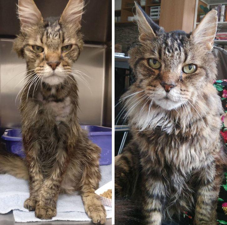 20+ фото животных «до и после», между которыми словно нет ничего общего